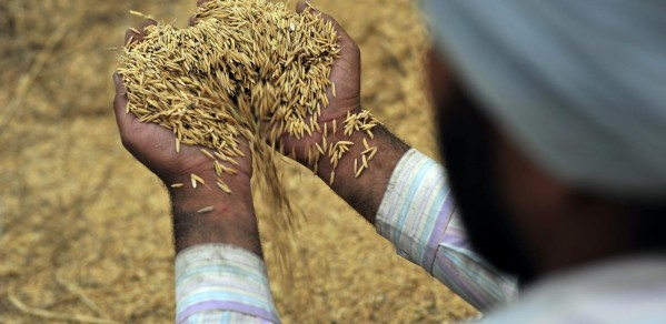 Increasing the efficiency of food supply chains can decrease wastage