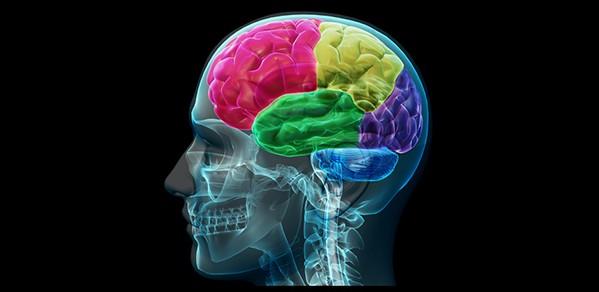 brain 22