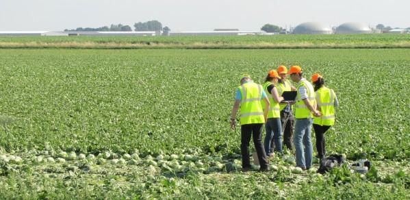 Initial field test of vegetable harvesting robots gets underway.