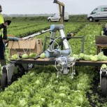 Field tests of 'Vegebot' the automated Lettuce Harvesting Robot developed by the Bio-Inspired Robotics Lab